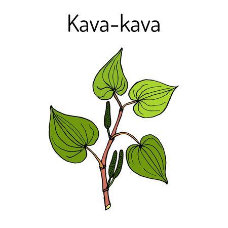 Kava Kava Extrakte Pflanze